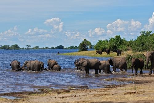 Botswana - DÉCOUVERTES BOTSWANAISES 2018