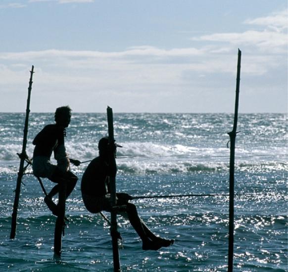 Photo n° 2 MERVEILLES DU SRI LANKA ET DUBAI 2017